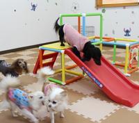 富士山 犬の保育園 COCOROのメイン画像