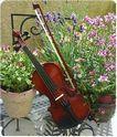 桃井ヴァイオリン教室 画像