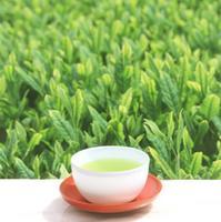 お茶の星香園のメイン画像