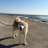 老犬ホーム&ペットホテル 九十九里パークのメイン画像