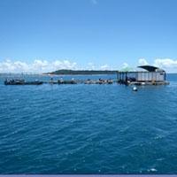本部釣りイカダ 海生活のメイン画像