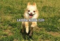 LAULEAのメイン画像