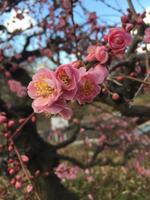 金藤緑化園     PickUp画像