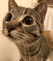 PetSitter LaToNeRuのメイン画像