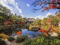 山本庭樹園 のメイン画像