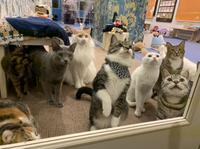 キャットランド 猫カフェルアナのメイン画像