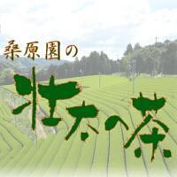 桑原園の 壮太の茶 PickUp画像