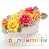 プンダミリアのメイン画像