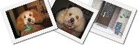 犬の美容室ウェストローズのメイン画像