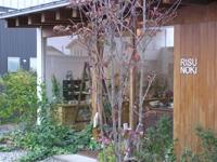 テーブル雑貨リスの木のメイン画像