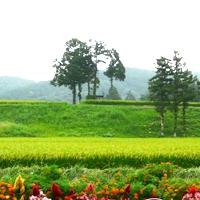 作山ファーム 画像