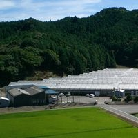 ローズガーデン徳島/有限会社 岡松バラ園 PickUp画像