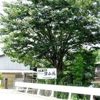 山野草、草物盆栽販売のやまおか碧山苑のメイン画像