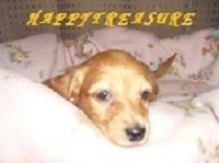 HAPPY TREASURE犬舎 PickUp画像