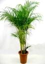 観葉植物レンタル提携店太平プラン PickUp画像