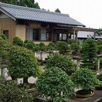 盆栽妙 山太園 画像