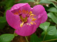 花和園芸 PickUp画像