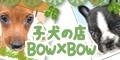子犬販売バウバウ−BOW×BOW− 画像