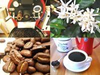 コーヒー豆通販LotusKitchenのメイン画像
