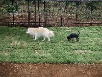 老犬ホーム 花園牧場のメイン画像