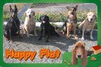 Happy Flat PickUp画像