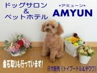 ドッグサロン&ペットホテル AMYUN PickUp画像