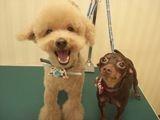 犬の美容室 CoCo 画像