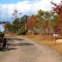 福住造園株式会社 庭木流通センター PickUp画像