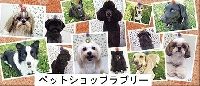 ペットショップラブリー犬猫美容室 PickUp画像