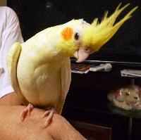 ペットミッキン PET MIKKINのメイン画像